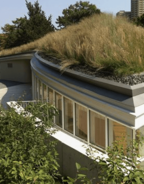 Green roofs insurance trends
