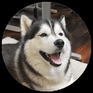 Company canines Koda