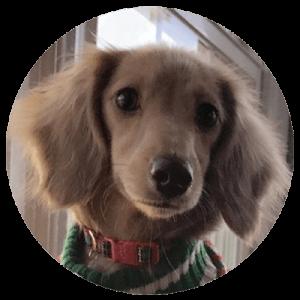 Company canines Winnie