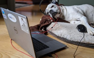 Meet the company canines of Athenium Analytics