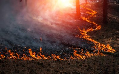 Winds, warmth and wildfire risks