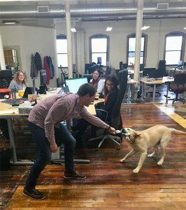 Athenium careers - dog wrestling