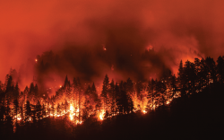 wildfire insurance featured image